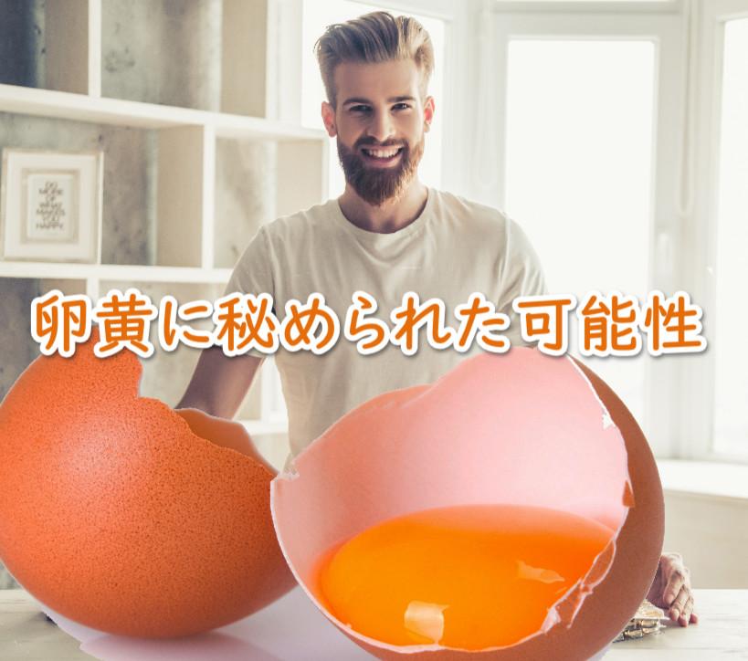 卵の黄身は捨てるな