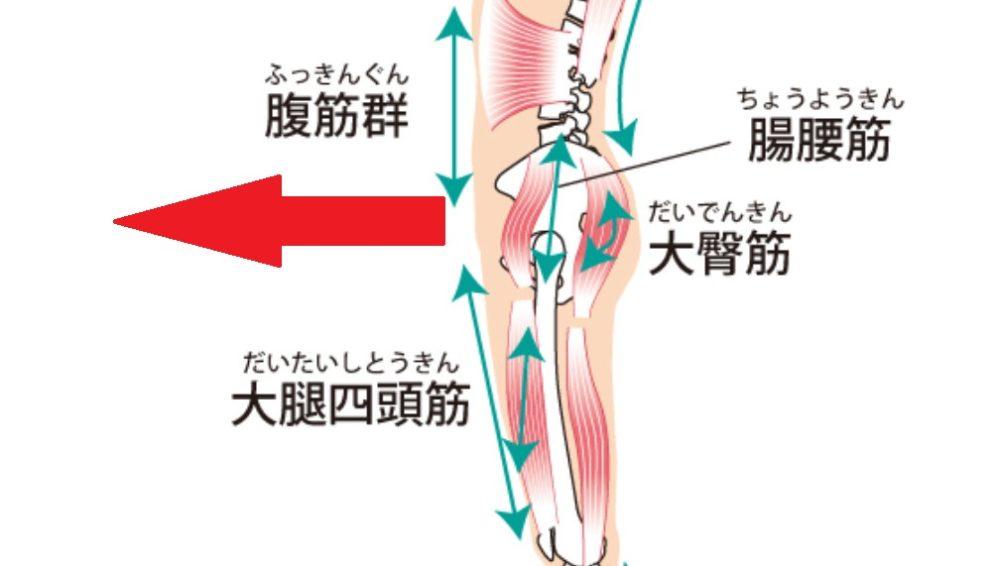 腸腰筋で腰が前に引っ張られる