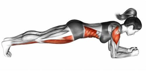 プランクで使う筋肉