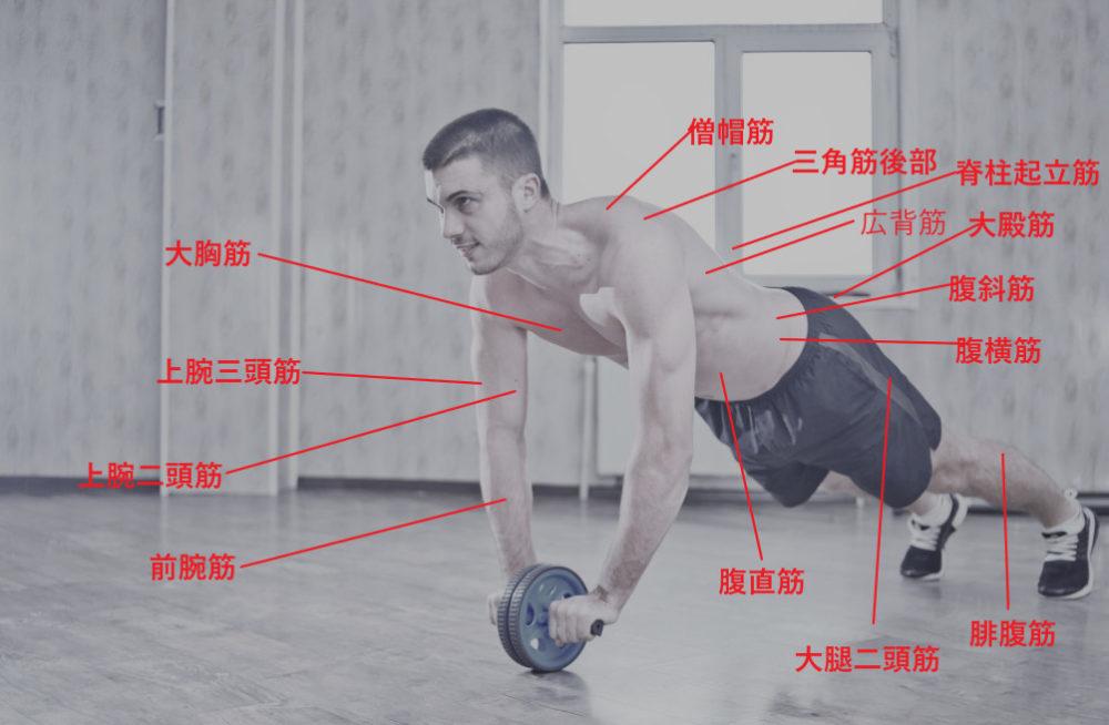 立ちコロで使う筋肉と部位