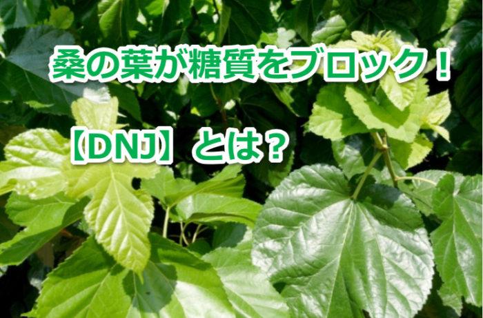 桑の葉のDNJとは