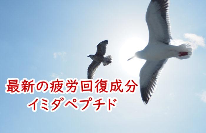 渡り鳥のイミダペプチド