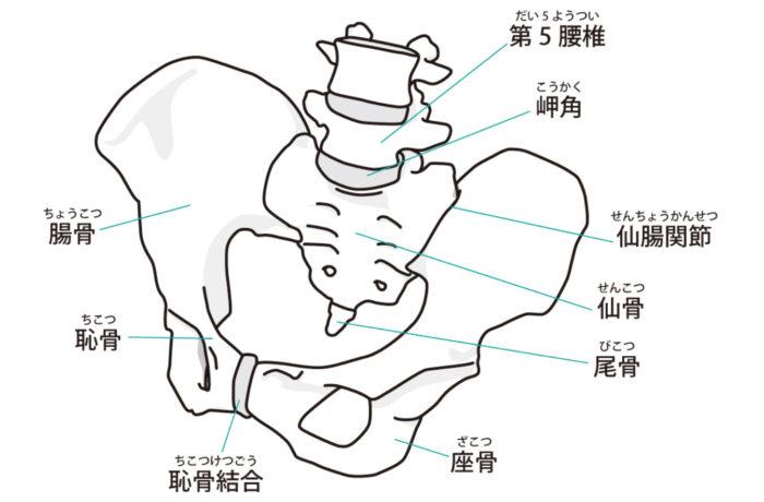 仙骨と坐骨と骨盤