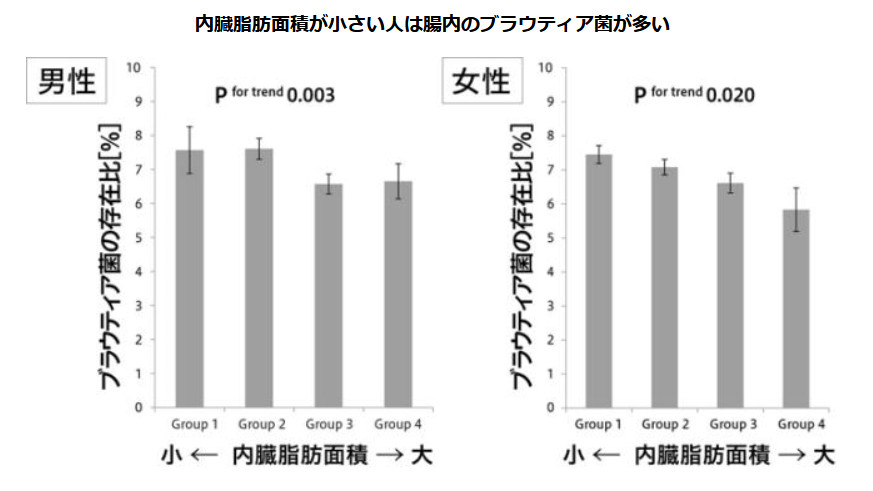 ブラウティア菌が多い人ほど内臓脂肪少ないグラフ