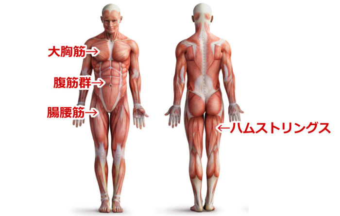 ほぐす筋肉